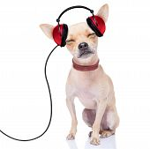 stock photo of jukebox  - chihuahua dog listening music while relaxing and enjoying the sound isolated on white background - JPG