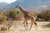 pic of biodiversity  - One day of safari in Tanzania  - JPG