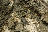 picture of termite  - Closeup of termites colony inside a rotten old tree