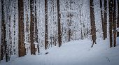foto of shacks  - A walk through the deciduous maple woods and a visit to the maple syrup cabin shack - JPG