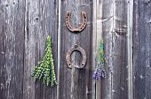 picture of hyssop  - lavender and hyssop medical herbs bunch on wall and two rusty horseshoe - JPG