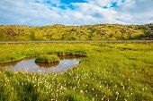 stock photo of tall grass  - Iceland in July - JPG