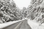 image of snowy-road  - Winter road with snowy trees on sides of it  - JPG