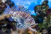 picture of algae  - The underwater world - JPG