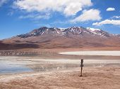 image of south-pole  - Altiplano landscape with the reflection of a snow - JPG