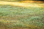 stock photo of grass bird  - Field of grass and birds the foraging - JPG