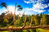 foto of hurricane wind  - Windfall In Forest - JPG