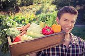 Handsome farmer with basket of veg on a sunny day poster