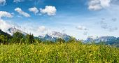 stock photo of snow capped mountains  - Low angle close up of wild grassy meadow with flowers - JPG