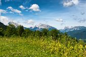 picture of snow capped mountains  - Close up of overgrown wild meadow with trees and snow - JPG