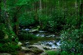 foto of smoky mountain  - Beautiful mountain river in the summer forest with blooming white flowers Great Smoky Mountains Tennessee - JPG