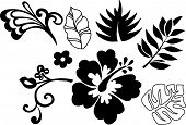 pic of hawaiian flower  - Tropical Elements Vector Illustration - JPG