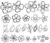 picture of hawaiian flower  - Sketchy Doodle Tropical Vector Illustration - JPG