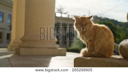 poster of Red Cat On The Background Of Architecture. Red Cat In Greece. Cat With A Sore Eye. Santorini Stray G