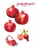 Watercolor Hand Drawn Illustration Of Pomegranate. Watercolor Fruit Set With Hole Pomegranate, Piece poster