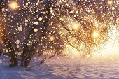 Christmas. Nature. Winter Landscape With Shining Snowflakes. Glowing Lights On Xmas Holidays. Frosty poster