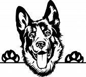 Animal Dog German Shepherd R5Fvgbfr Peeking.eps poster