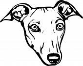Animal Dog Greyhound 4R5R.eps poster