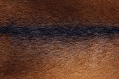 Wildlife, Animals, Textures Concept. Cropped Shot Of  Brown Fur. Brown Fur Close Up. Fur Texture. Ab poster
