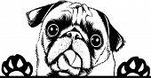 Animal Dog Pug 5Tg6Yqa Peeking.eps poster