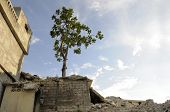 stock photo of life after death  - A tree standing amongst the devastation around after the earthquake in Haiti - JPG