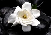 stock photo of gardenia  - White gardenia flower with therapy stones - JPG
