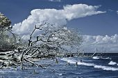 infrared photo of trees falling into ocean