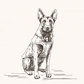 pic of belgian shepherd  - Sketch of Belgian Shepherd dog - JPG