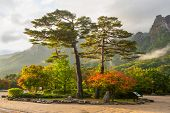 stock photo of seoraksan  - famous pair pines in the morning light  - JPG