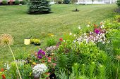 pic of manicured lawn  - Planting new flowers in a colorful private garden with lush green landscaped flowerbeds and a neat lawn - JPG