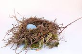 foto of bird-nest  - A solitary egg in a bird - JPG
