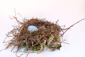 foto of nest-egg  - A solitary egg in a bird - JPG