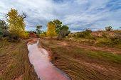 stock photo of cottonwood  - Muddy Creek and Autumn Foliage  - JPG