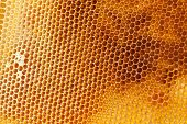 image of honeycomb  - Bee honeycombs filled med close up as a background for design - JPG