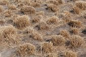 image of veld  - Close up of desert with dry grass as background - JPG