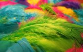 picture of feathers  - green fluffy feather in a pile of feathers - JPG