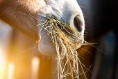 image of horse face  - Horse eating grass in the mounntain of italy - JPG