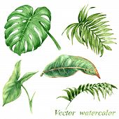 picture of tropical plants  - Set of watercolor tropical plants leaves isolated on white - JPG