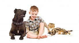 picture of scottish-fold  - Happy boy sitting with the dog breed Staffordshire Terrier and Scottish Fold cat isolated on white background - JPG