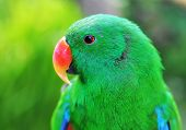 picture of green-winged macaw  - Green parrot on the tree in jungle - JPG