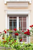 foto of english cottage garden  - Old Sash Windows with Window Box Gardens of a Old English Town House - JPG