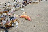 stock photo of polluted  - Garbage on a beach environmental pollution concept picture - JPG