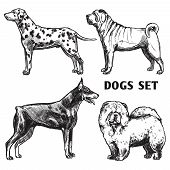 picture of doberman pinscher  - Sketch dogs portrait set with dalmatian doberman shar - JPG