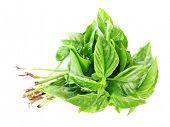 stock photo of basil leaves  - Fresh basil leaves isolated on white - JPG
