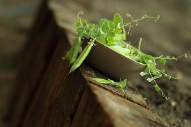 image of pea  - brown ceramic bowl with open green peas on old wood - JPG