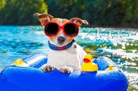 stock photo of toy dog  - jack russell dog sitting on an inflatable mattress in water by the sea river or lake in summer holiday vacation rubber plastic toy included toy included - JPG