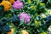 Purple Cauliflower, Orange Cauliflower And Roman Cauliflower On Display poster