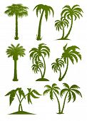 set of palm tree silhouettes vector illustration isolated on white background