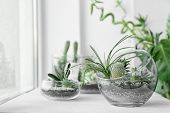 Mini succulent garden in glass terrarium on windowsill poster