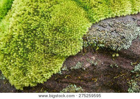 Beautiful Moss On The Rock